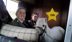 Celebrity pony